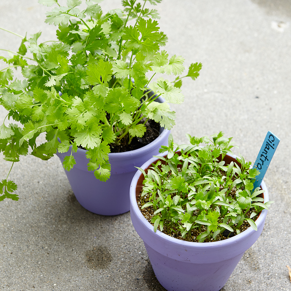 6 Foolproof Herbs for Gardening Newbies