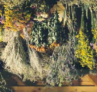 Hang Herbs to Dry