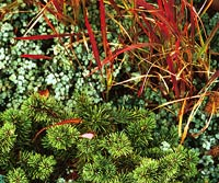 Green_Green Ferns With Red Straw Grass