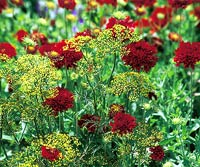 Red_Blood Red Dry Flowers With Green Babies Breath