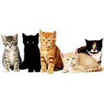 5 kittens posing, various colors