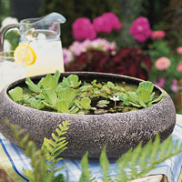 Three Floater Plants in Faux Granite Bowl