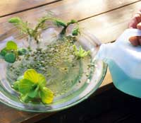 Pouring Fertilizing Solution into Water Garden