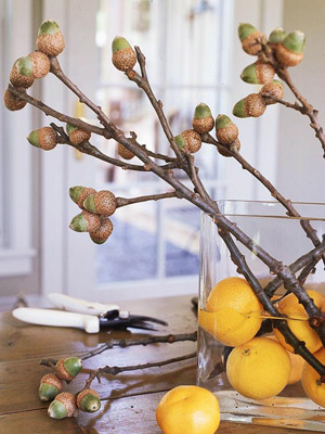 acorn branch in container with oranges