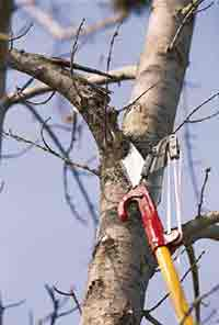 Pruning Safety