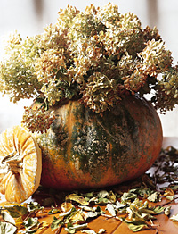 Make it in minutes hydrangea pumpkin