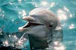 Smiling Dolphin