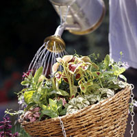 watering hanging flower basket