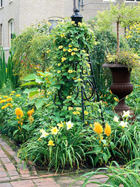 Yellow-Theme Garden Plan