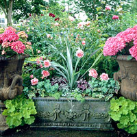Classic Container Garden Plan