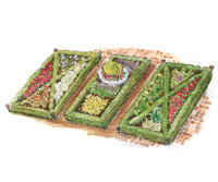 Formal Knot-Garden Plan Illustration