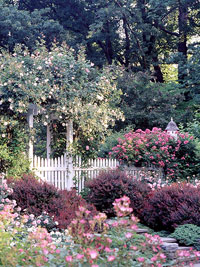 Rose-Covered Arbor Garden Plan