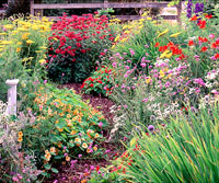 Hot-Color, Heat-Resistant Garden Plan
