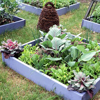 Small-Space Vegetable Garden Plan