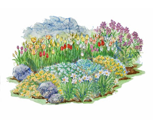 Spring Show Garden Plan Illustration