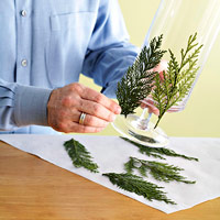 attaching pine leaves to glass