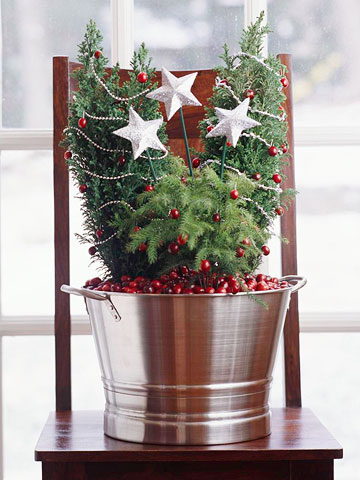 cranberry trees in bucket