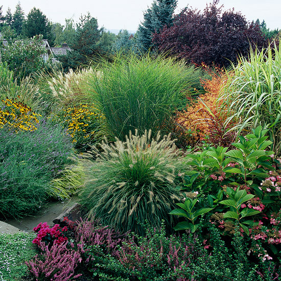 Ornamental grasses for sun and shade on pinterest for Landscape design using ornamental grasses