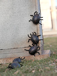 line up spiders on tombstone