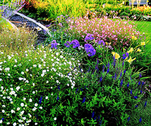 Summerlong Color Garden Photo