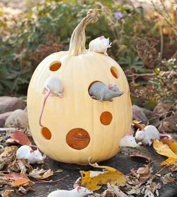 Cheese and mice pumpkin