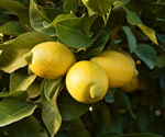Citrus need special care after a freeze.