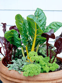 Chard, Sage, Parsely