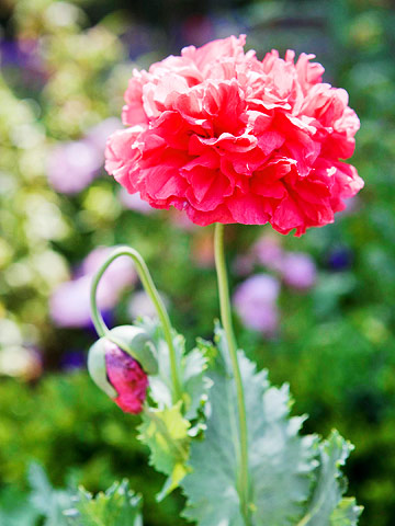 How To Grow A Lawn From Seed