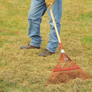 Fall Lawn Care | Irvingparkgardenclub's Blog