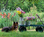 Pets are a big part of gardening