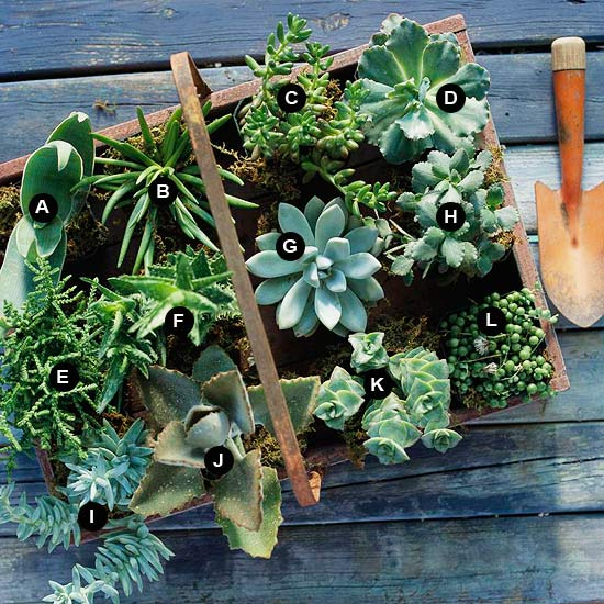 Crate of succulents