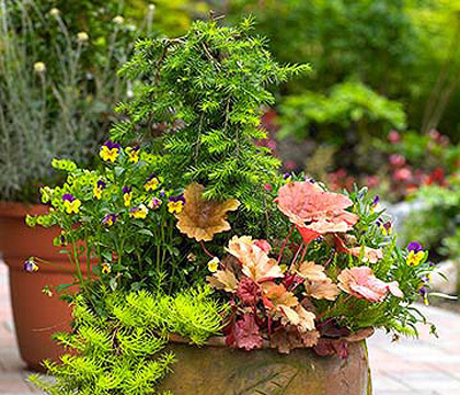 Show Off Your Best Spring Garden