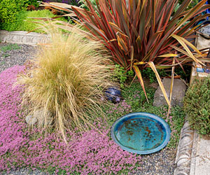 Thyme, Phormium, and Ornamental Grass