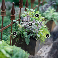 Herb Windowbox with numbers