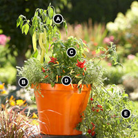 Container Garden with numbers