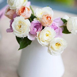 Ranunculus in a White Vase