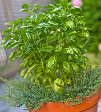 Container Garden with Herbs