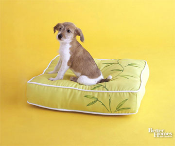 Dog Sitting on Green Pillow
