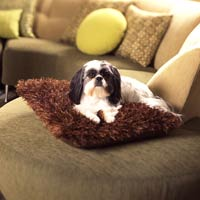 Dog Sitting On Knitted Brown Pillow On Green Ottoman