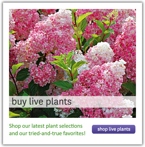 Buy Live Plants