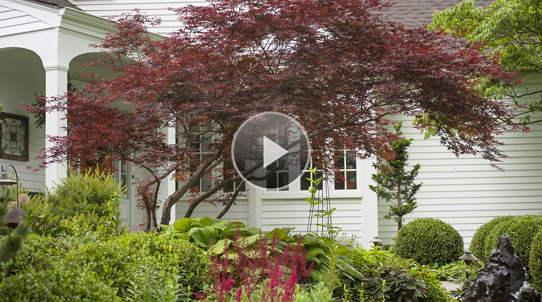 Small canopy trees images for Slender trees for small spaces