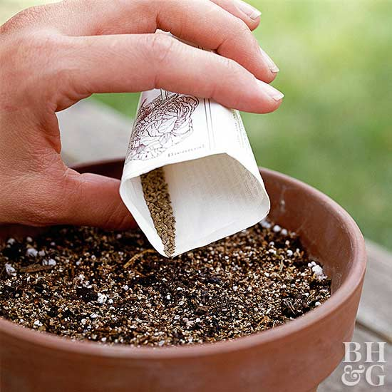 Guide to Buying Seeds
