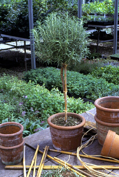 Make Your Own Topiary