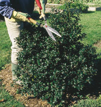 Caring for Trees Shrubs