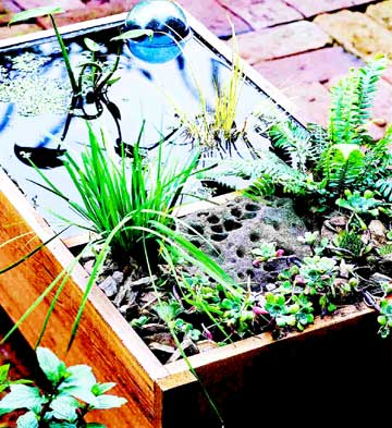 Build a Deck-Top Pond