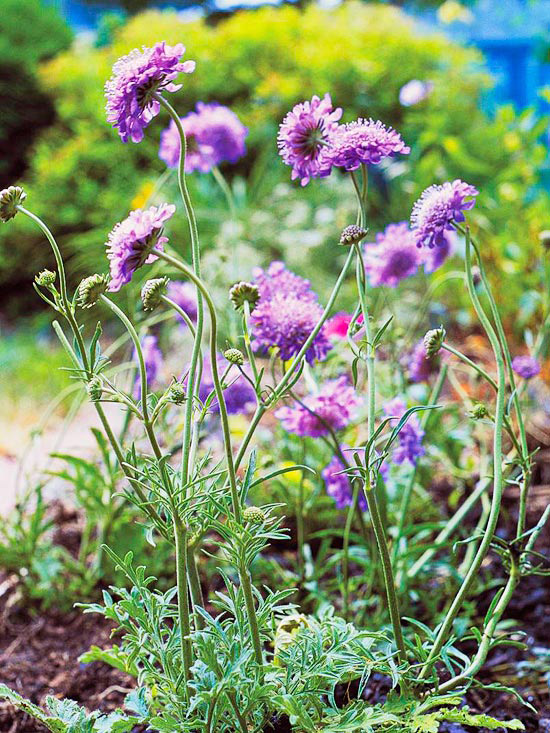 Top 10 Perennials