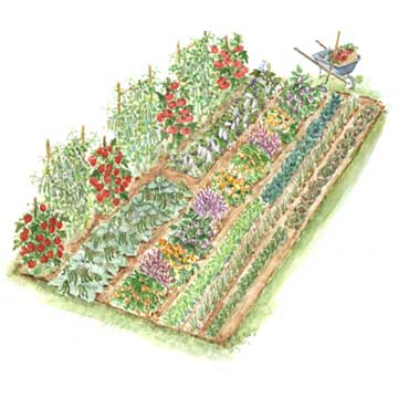 Vegetable Garden Layout Ideas 4x12 sample vegetable garden plan Heritage Vegetable Garden