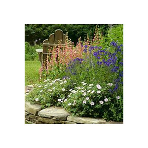 Choosing the Right Perennials