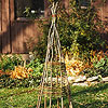 Willow Plant Tepee