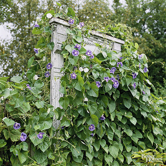 Trellises and Vine Supports
